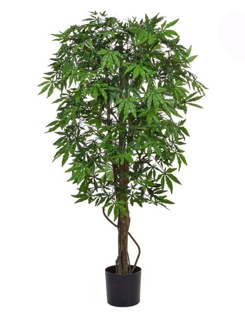 Maple Green