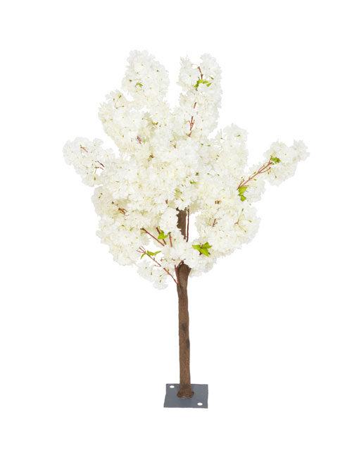 Cream Blossom 1.4m