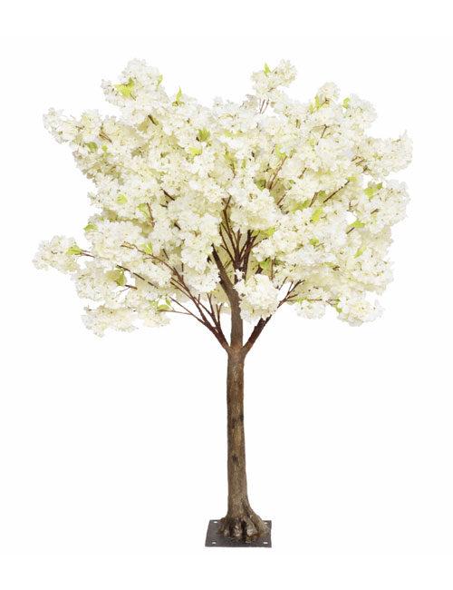 Cream Blossom 1.8m