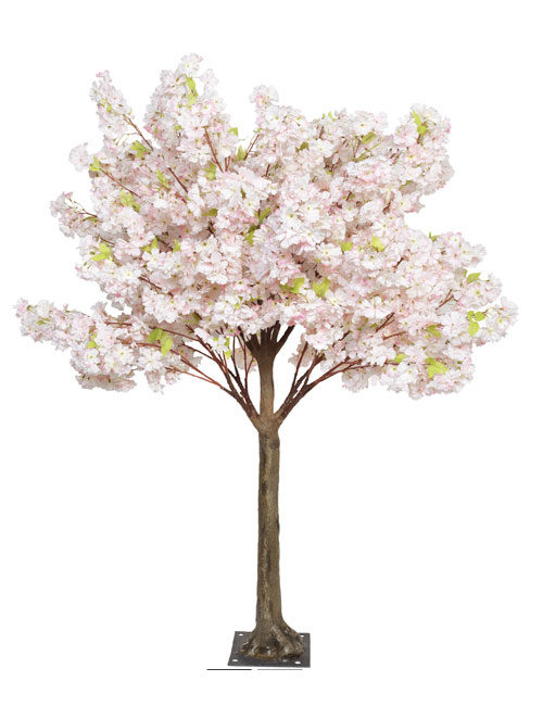 Pink Blossom 1.8m