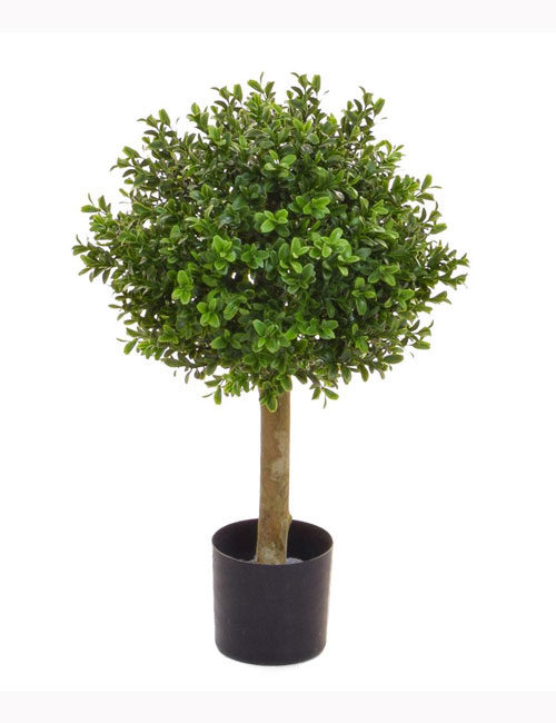 topiary Buxus Ball