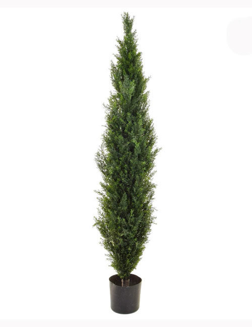 150cm Mini Cedar