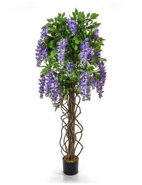 Wisteria Purple