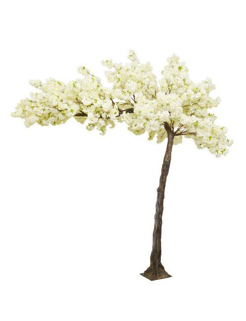 Cream Blossom Tree