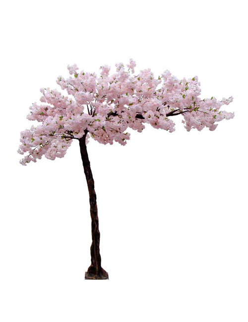 PinkBlossom