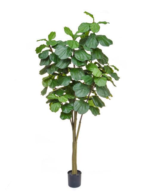 Fiddle Tree