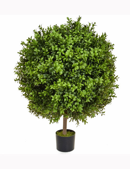 Buxus Ball Topiary