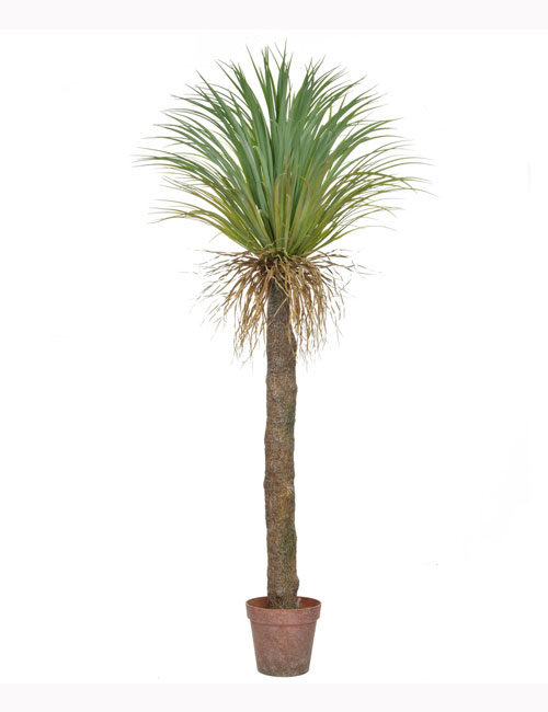 180cm Palm Cycas