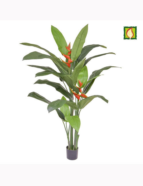 Palm Heliconia