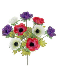 Anemone-Purple-Red-White